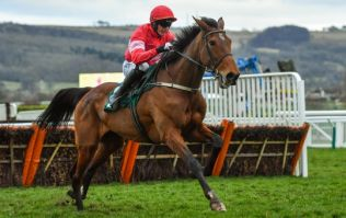 Willie Mullins plotting a run at the Champion Hurdle with 'special' mare Laurina