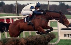 Ruby Walsh pays tribute to his first ever Grade 1 winner Alexander Banquet after horses death